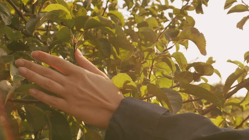 Kết quả hình ảnh cho touch  leaf