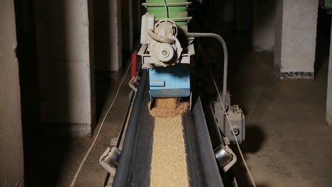 Grain moves along the conveyor belt. Wheat is transported by conveyor for drying and grinding in a mill. Wheat is ground into flour. Wheat grain on the conveyor. Granary in the milling plant.