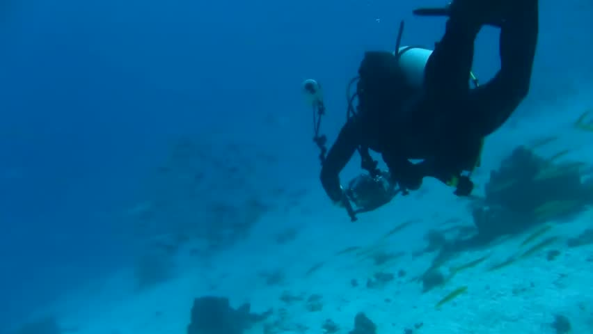 Scuba diver approaching fish shoal in the red sea