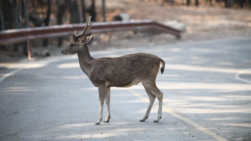 Header of deer