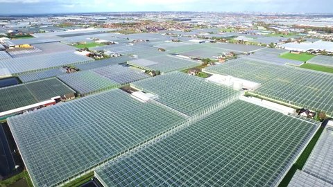 Aerial of greenhouses / glasshouses in the Westland aria in The Netherlands