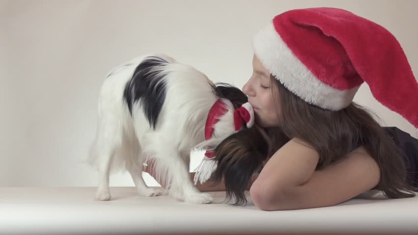 Beautiful teen girl and dog Continental Toy Spaniel Papillon in Santa Claus caps joyfully kissing and fooling around on a white background slow motion stock footage video. | Shutterstock HD Video #32427517