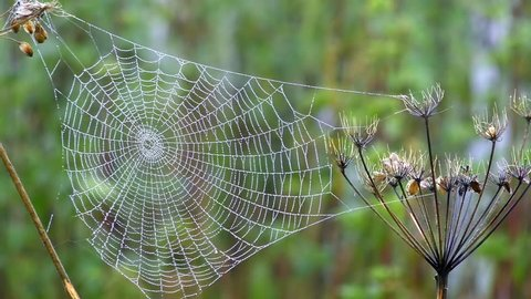 Spider web in autumn