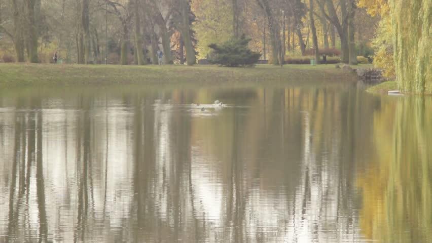 Mallard Ducks in lake | Shutterstock HD Video #32597200