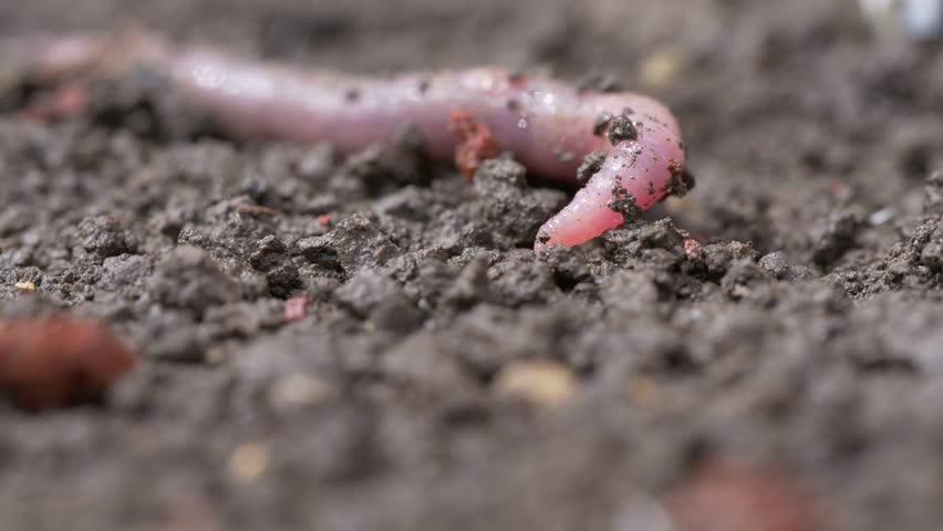 Header of worm