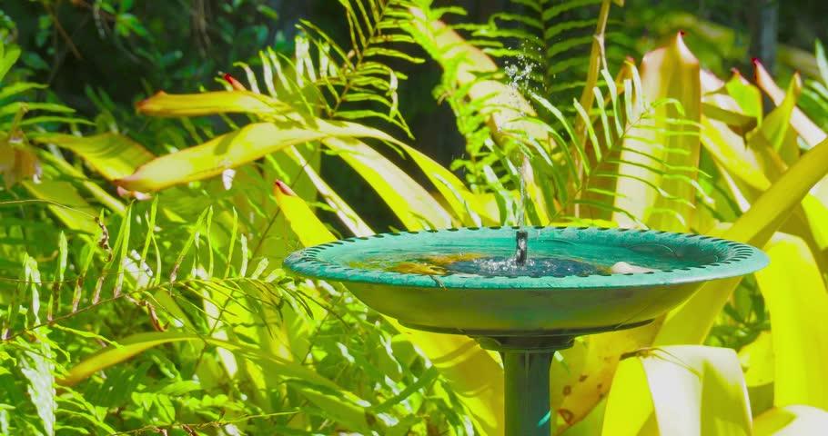 Video of a bird bath fountain with an Anole