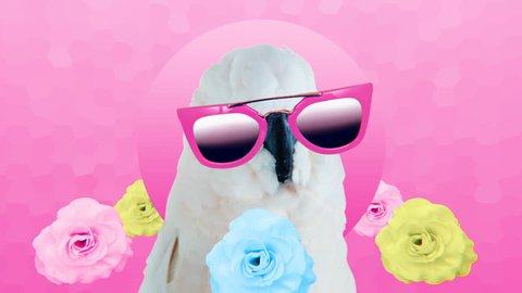 Minimal Motion collage art. Fashion Funny Parrot with sunglasses. Vacation party mood