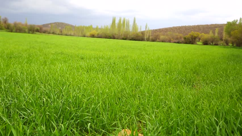 tall green grass field. Practices From Agricultural Land - HD Stock Video Clip Tall Green Grass Field