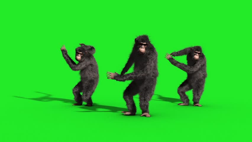 Group Chimpanzee House Dance Dancer Green Screen 3D Rendering Animation Animals