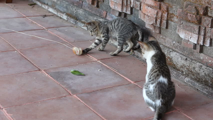 Little cat playing with bread