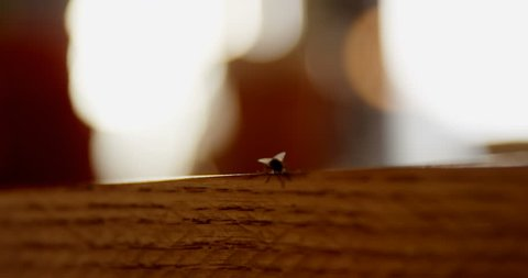 Close-up of housefly sitting on the edge of wooden table 4k