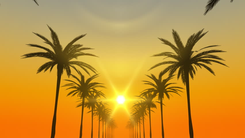 Palm trees silhouette loop CG animation