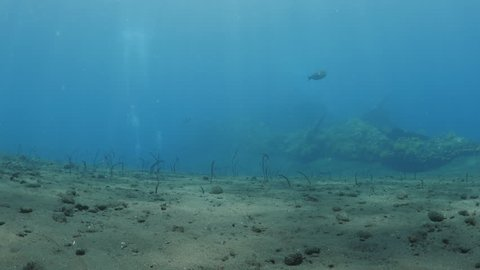 Eel Garden near Liberty shipwreck at Tulamben in Bali, Indonesia
