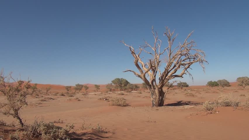 HD high quality video scenic view of dead trees in famous endless sand sea and Sossusvlei Namib Desert red sand dunes on sunny morning in Namib-Naulkuft Park in Namibia, southern Africa