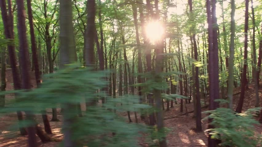Aerial Flying Between Trees in Forest on Sunny Day
