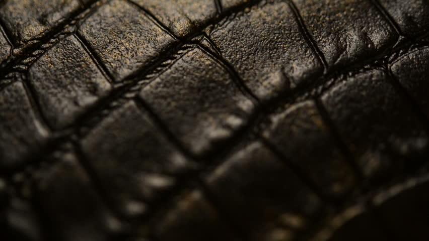 Header of crocodile