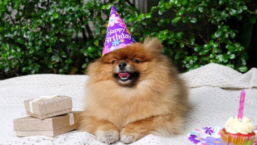 Presenting A Birthday Cake For Stockvideos Filmmaterial 100 Lizenzfrei 34146820