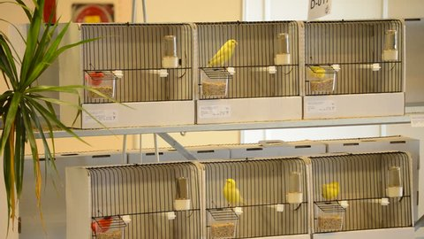 Different birds in cages in an exhibition