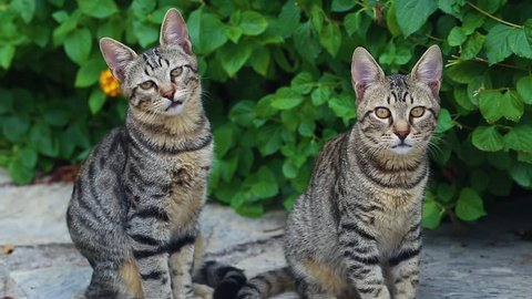 Closeup portrait of cute family of young tabby cats sitting on ground outdoors. Cats look at camera.