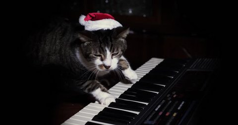 A funny cat wearing a Santa Claus hat playing a keyboard or organ.