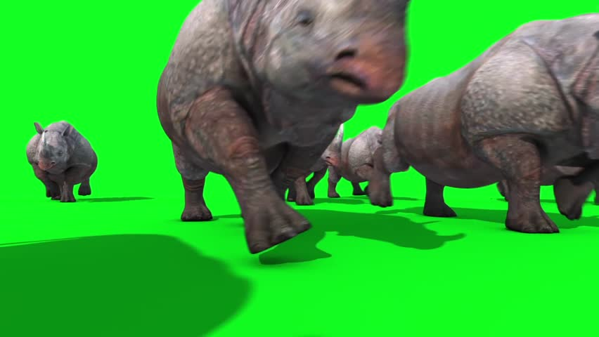 Group of Rhinos Runs Front Green Screen 3D Renderings Animations Animals