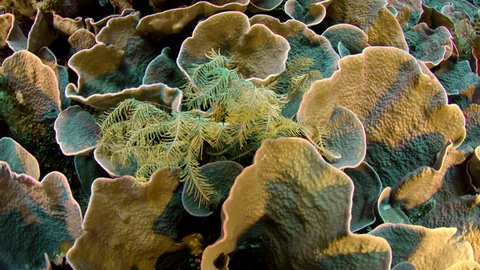 Shot over an intact coral reef with hard corals, soft corals and many tropical fish, WAKATOBI, Indonesia, slow motion