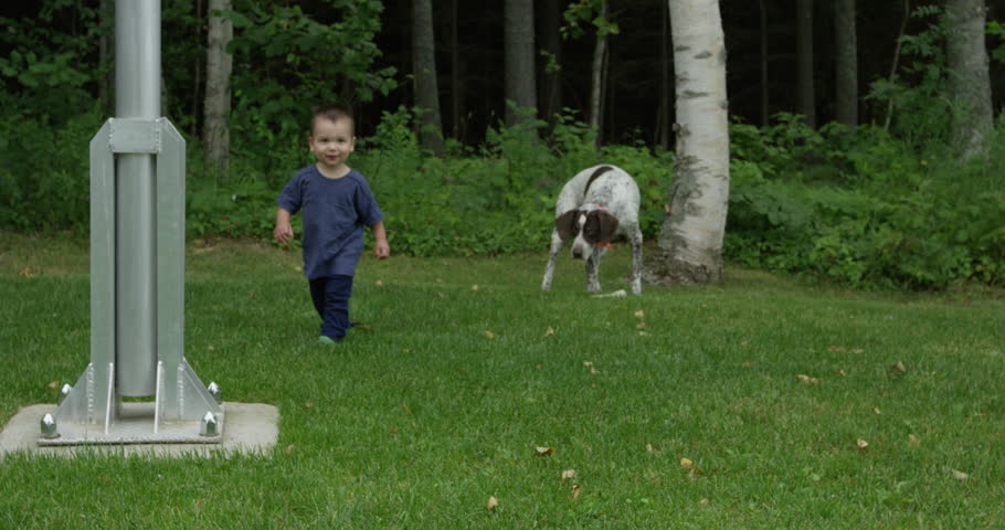 Toddler and family dog play on grass #34608100