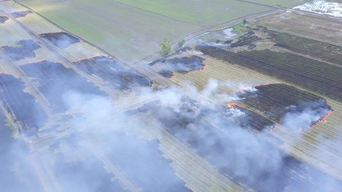 Aerial view Burn rice fields cornfield after harvest burning biomass in Ayutthaya province Thailand