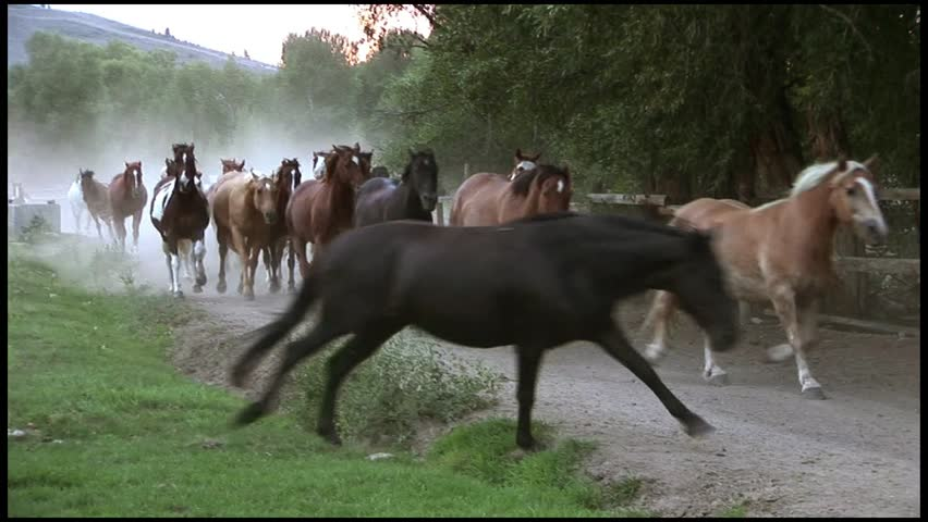 HORSES RUNNING FAST DOWN DUSTY ROAD WITH COWBOY | Shutterstock HD Video #3478223