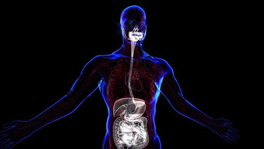 Stock video of 3d human body in loop rotation | 1353268 | Shutterstock
