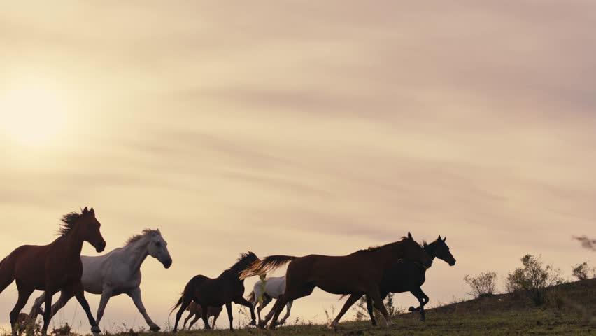Horses running on a grass field #34956070