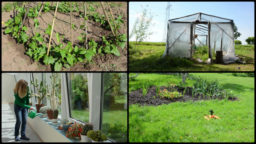 Woman watering cactus, flowers, beans and tomato plants. Greenhouse conservatory houses in garden. Montage of video footage clips collage. Split screen. Black round corner frame. 4K UHD 2160p | Shutterstock HD Video #34993861