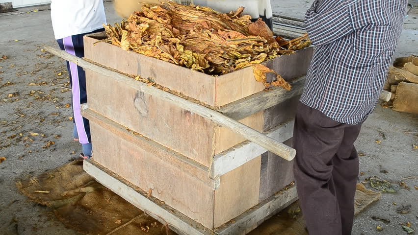 Dry tobacco leaf pack to factory