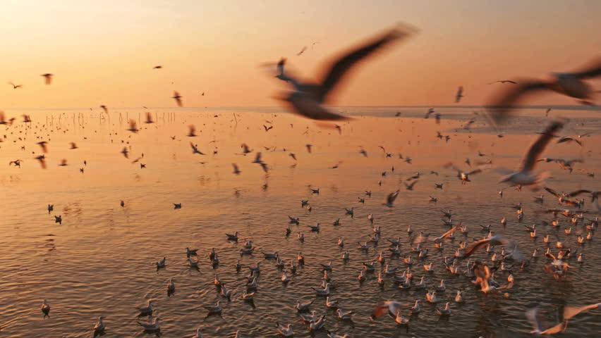 Flying birds with sunrise at Samut Prakan Province, Thailand.