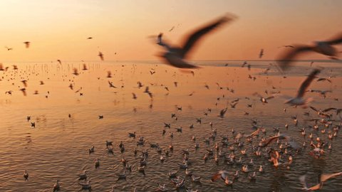 Flying birds with sunrise at Samut Prakan Province, Thailand.