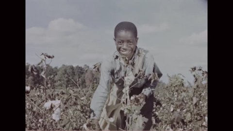 CIRCA - 1950s - Cotton grown in North Carolina is used for a variety of fabrics in the textile industry.