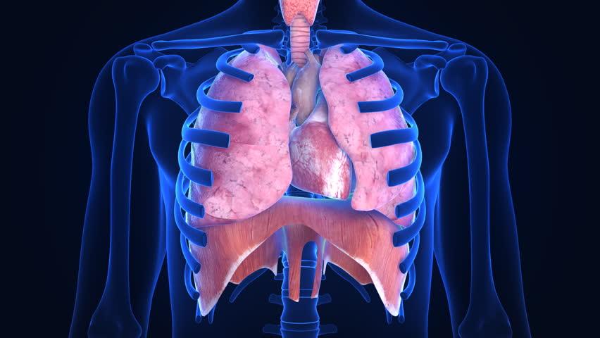 X-ray scanner of human lugs. Loop-ready | Shutterstock HD Video #3510233
