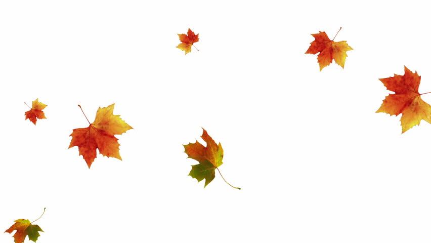 Rainbow dance letters music 08 hd dancing text - Descargar autumn leaves ...