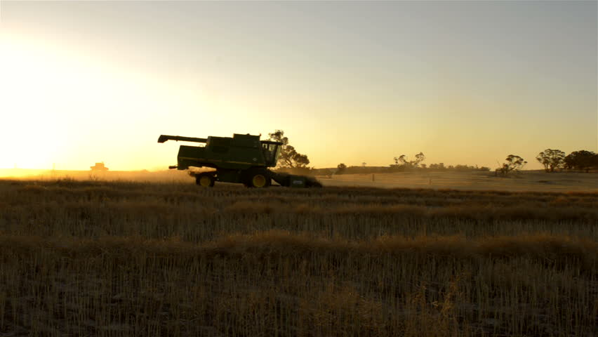 The sun setting on an farmer harvesting a canola crop, that has been swathed