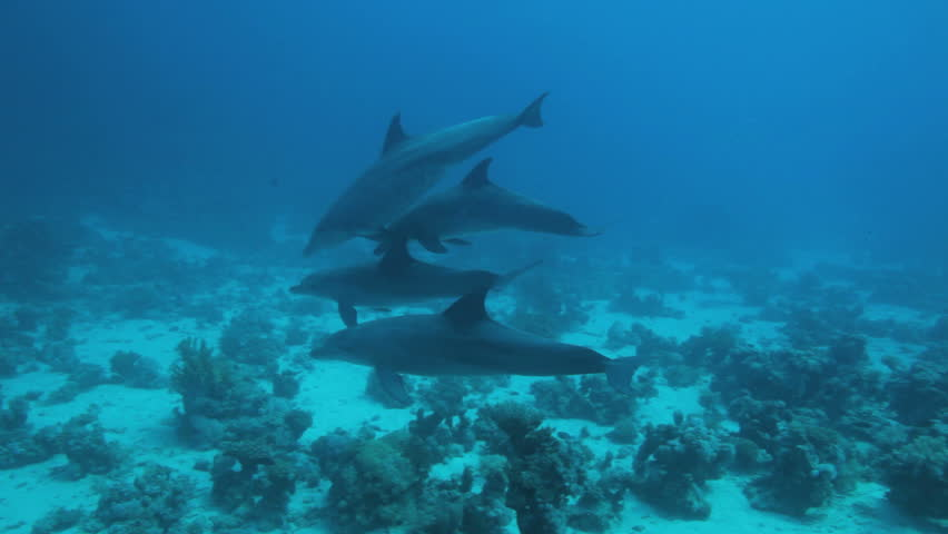school of dolphin play in the water