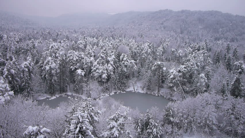 AERIAL: Winter snow covered forest