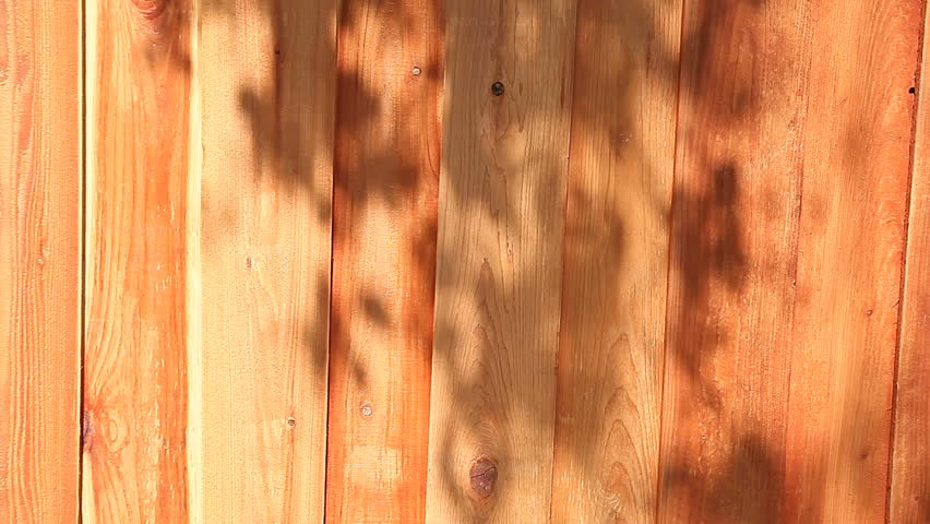 shadows of an overhead oak tree on a new fence