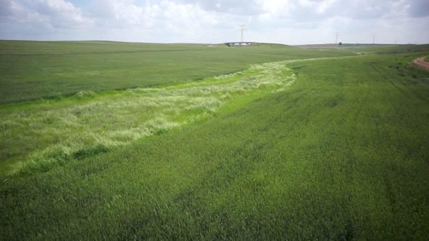 Wheat Field-aerial shot