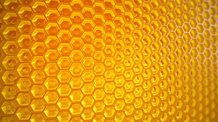 D Beehive Craft