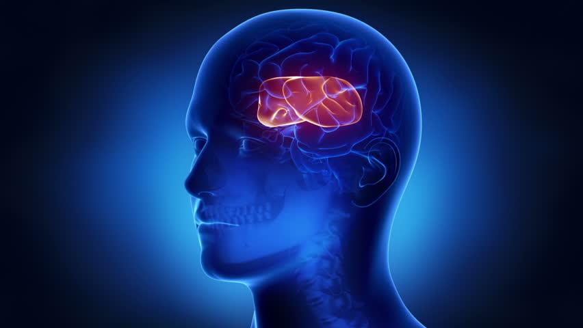 Anatomy of brain parts