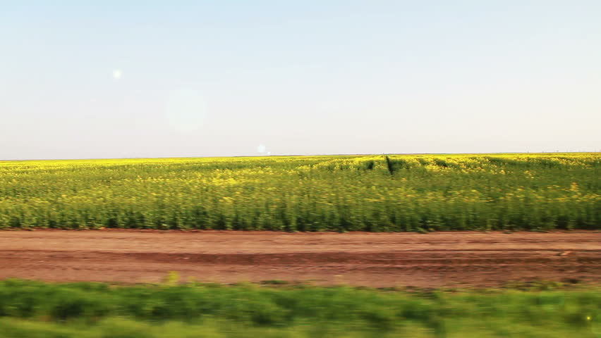 Yellow and green flowers under blue sky from fast moving car.