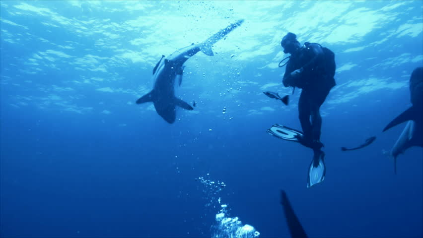 Sharks surrounding single scuba diver | Shutterstock HD Video #3729650