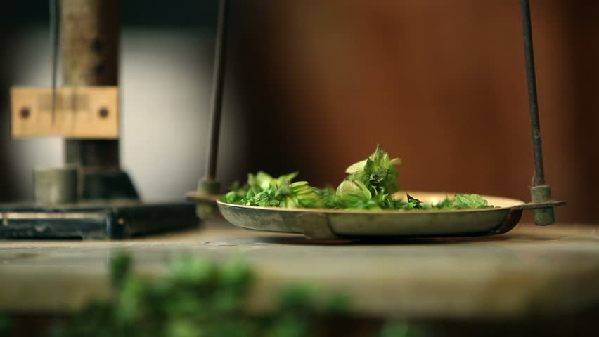Close up of weighing hops old fashioned way | Shutterstock HD Video #3820928