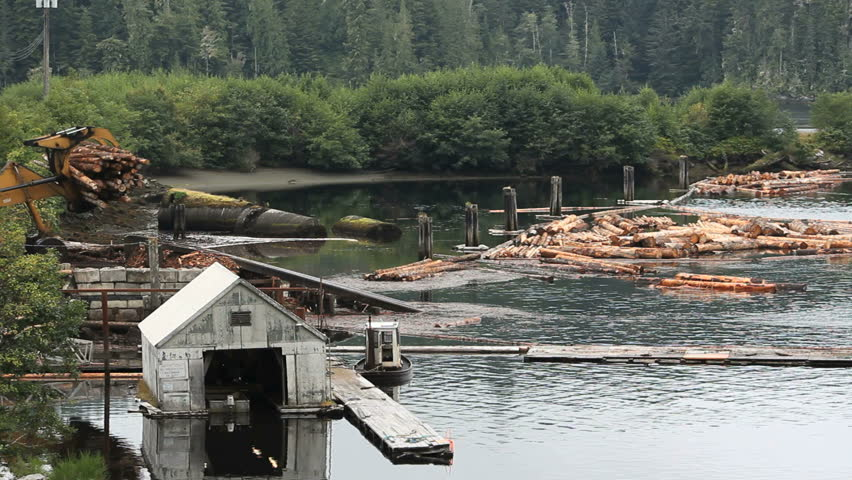 Logs Dumped into Water, British Columbia. Lumber being dropped into Beaver Cove for sorting and assembling into log booms on Vancouver Island. British Columbia, Canada.