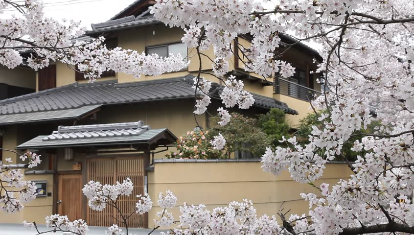Cherry blossoms and japanese house in spring time, Japan
